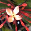 Minumi: Floresita