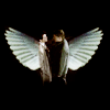 fai_nekoi: CastielDean: Angels that we are