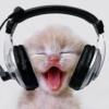 Cats Kitty headphones
