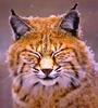meow_meow userpic