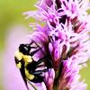 belles_abeilles userpic