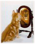 Котенок-лев
