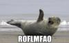 seal ROFLMFAO
