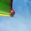 Stock-Summer-Ladybug