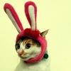 creaux_o: bunny cat