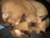 lttle kitties