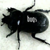 bugs: crackerjack