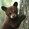 Jeri Smith-Ready: bear cub