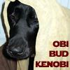 Bluespirit: Buddy Obi Bud