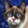 cattotem userpic