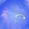 parachutebinge