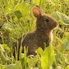 Bunny morning