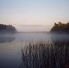 betagoddess: Cottage Misty Morning