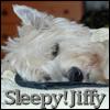 Jiffy - sleepy