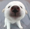 Polar Bear pup