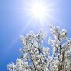 Fanny: sunshine