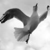 kiwi, seagull