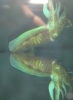 coralsdance userpic