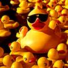 Stock - Ducks