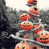 Hallowe'en Tree