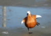 just_dead_duck userpic