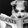 Literary puppy