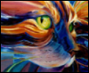 Phoenix-cat