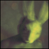 white rabbit inside