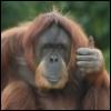 shaggy_ape userpic