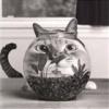 кот аквариум