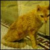 millichope: кот