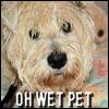 Jiffy - wet pet