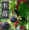 blackberryspark userpic