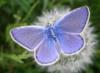 violety68 userpic