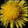 tat_sky userpic