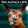 It's Teh Alpaca Lips!