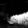 tsh_rabbit userpic
