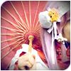 shinya_sano userpic