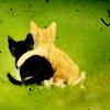 seagray: kitten pals