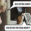 dovil: step cat