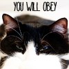 Cat you will obey