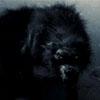 howlofthewolf userpic