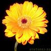 yellow_flower_m userpic