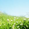 kasumee userpic