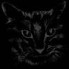 night_cat