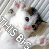cosmic: Cat: November this big