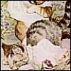Moppet Kitten