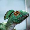 Primeval: Rex