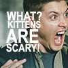 cassopeia: WHAT KITTENS ARE SCARY