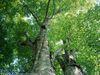 greenseason userpic